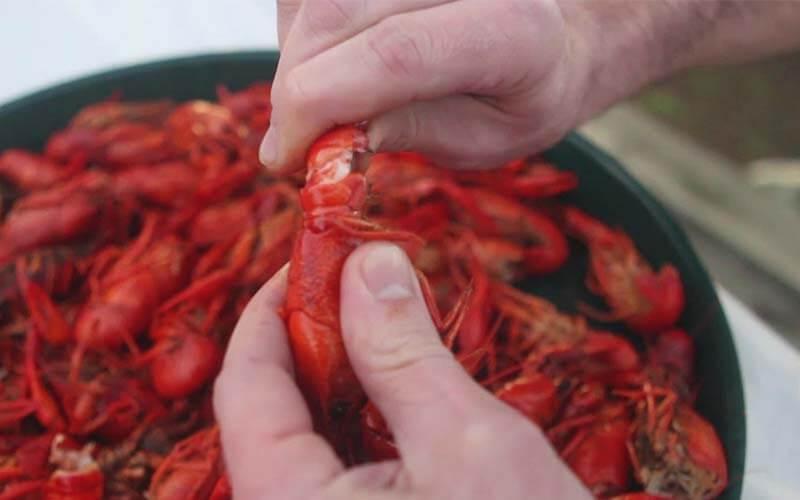 crayfish eat